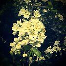 blossom by trishringe