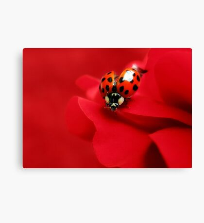 Good luck red.... Canvas Print