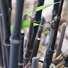 Black bamboo by trishringe