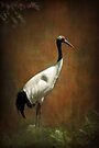 Bringer of luck - Japanese Crane by steppeland