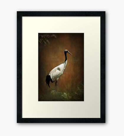 Bringer of luck - Japanese Crane Framed Print