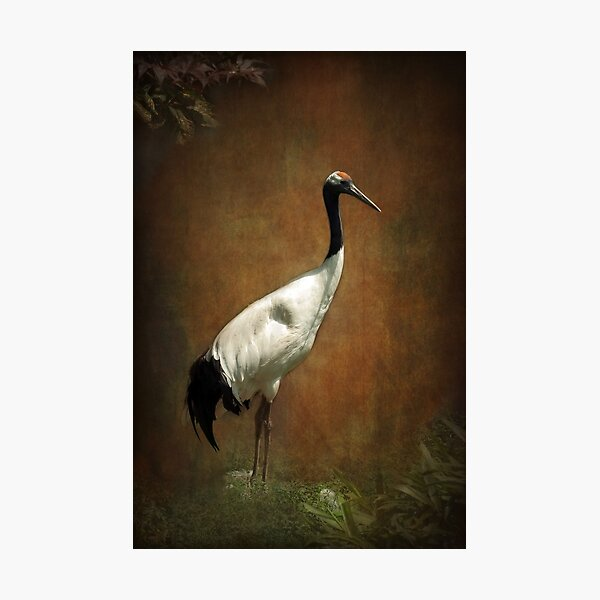Bringer of luck - Japanese Crane Photographic Print