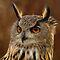 Whooo Has the Best Owl Shot?