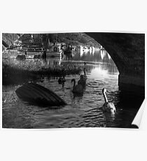 Swans under Graignamanagh Bridge, County Kilkenny, Ireland Poster