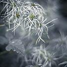 Soft  by Karen Havenaar