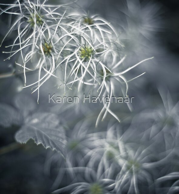 Soft  by Karen Havenaar