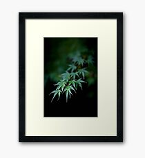 Maple in Green Kyoto Framed Print