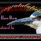 Extreme Close Ups Banner Challenge by TJ Baccari Photography