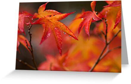 Maple by Jessica Loftus