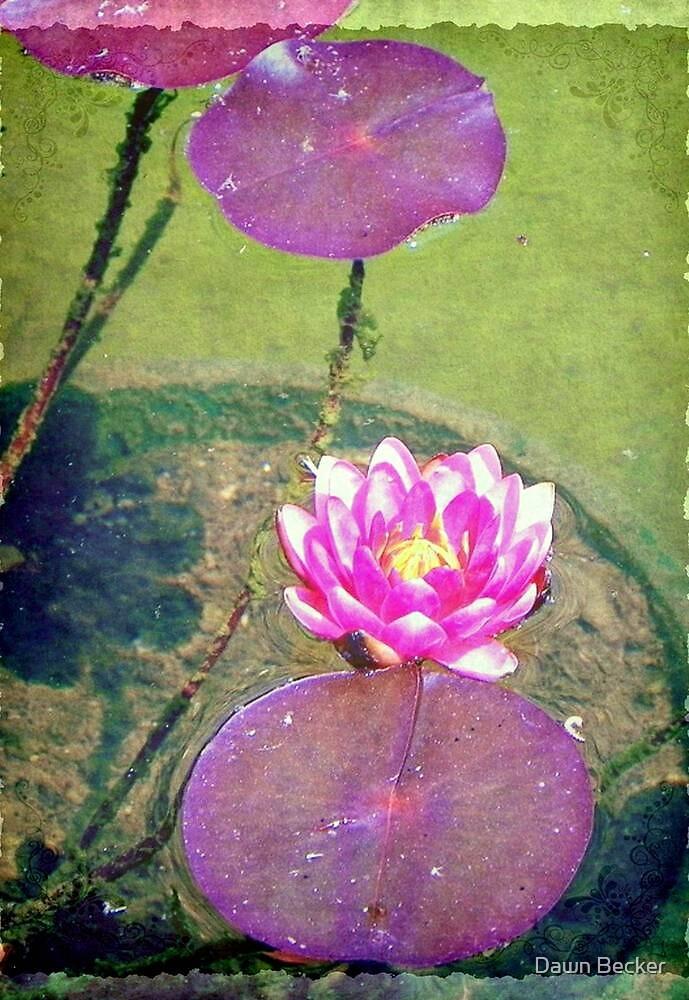 Pretty water lily © by Dawn Becker