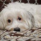 Where's my treat? by Sally Kady