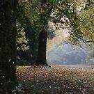 Soft Colours of Autumn - Mt Wilson NSW Australia by Bev Woodman