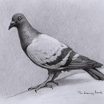 Pigeon by thedrawinghands