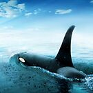 Orca by Cliff Vestergaard