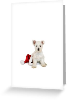 Westie Pup and Santa Hat by Natalie Kinnear