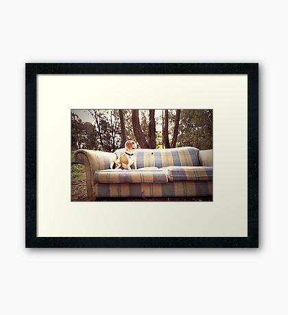 Dog in the Woods Framed Print