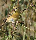 A Little Bird by Elaine Manley