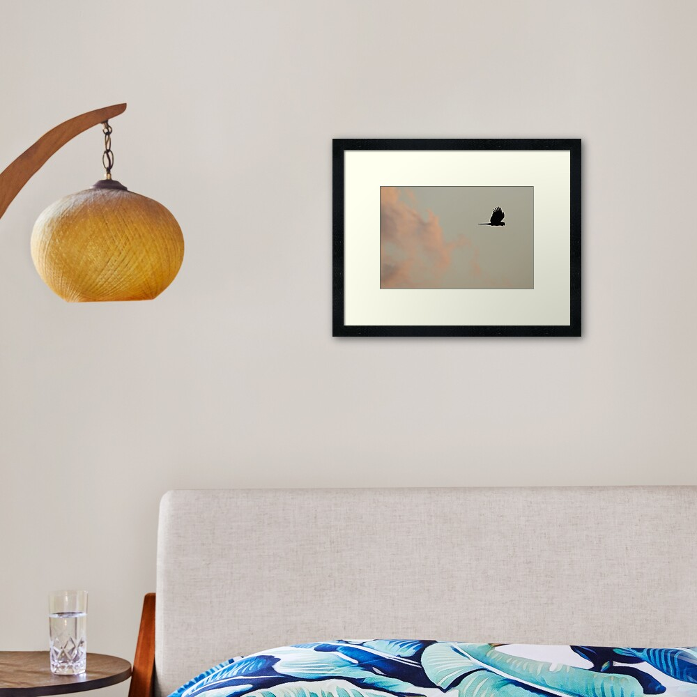 Flight of the Black Cockatoo Framed Art Print