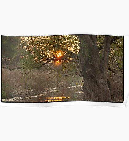 Tree of ages - Large  Poster