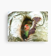 Umm!! Should I Be Collecting Nuts? - Love Bird - NZ Canvas Print