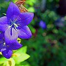 Purple Delight by Cassie Jahn