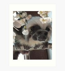 Tamarin Monkey Art Print