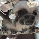 Tamarin Monkey by Julesdi88