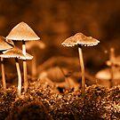Group mushrooms. Sepia by qiiip