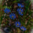 Wisconsin Wildflowers by Thomas Sielaff