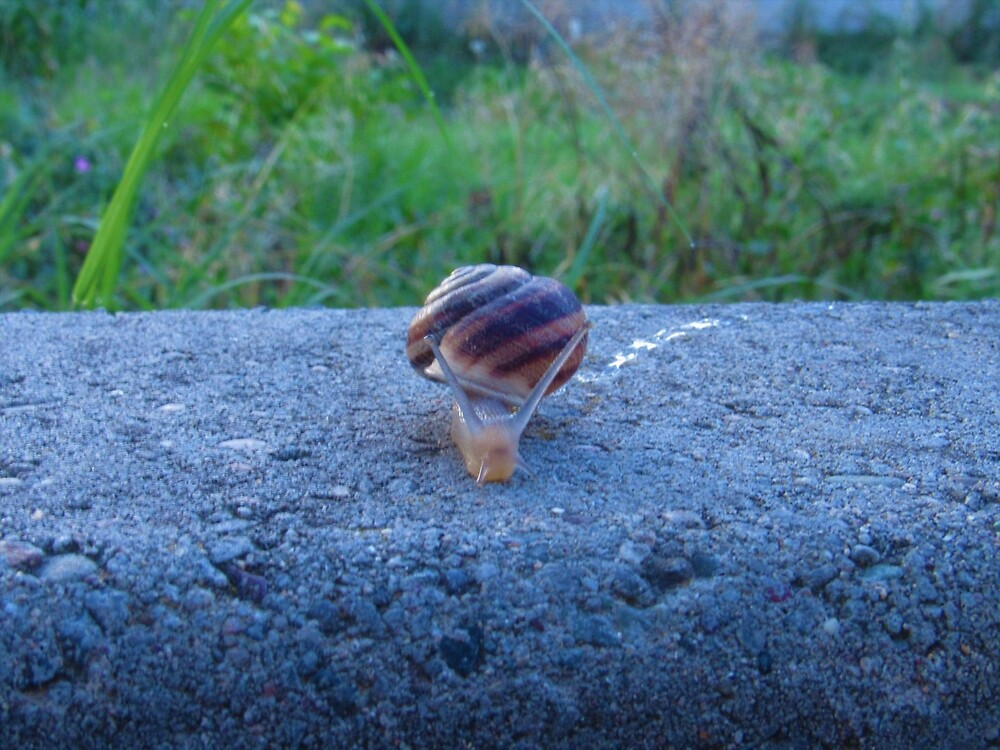 Slime-Trail Snail by tomeoftrovius