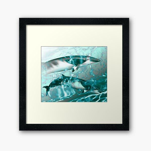 Minke whales in the Antarctic Framed Art Print