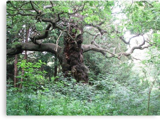 Sherwood Oak by AppleAndThorn