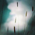 Grass 'gainst sky by Nikki Smith