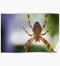 Divine Arachnid Poster
