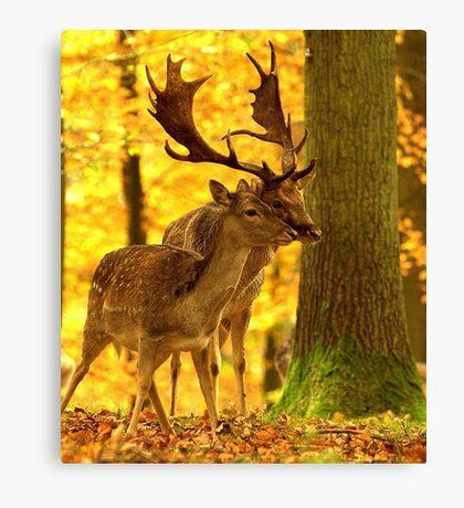 Woodland meeting Canvas Print