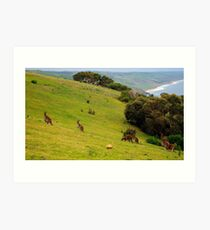 Kangaroos with Joeys grazing Art Print