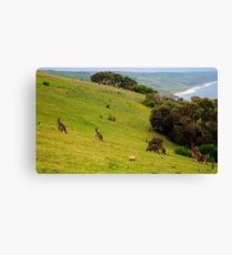 Kangaroos with Joeys grazing Canvas Print