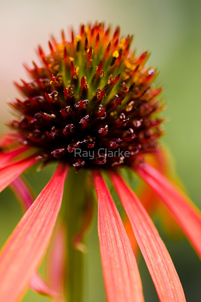 Orange Cone by Ray Clarke