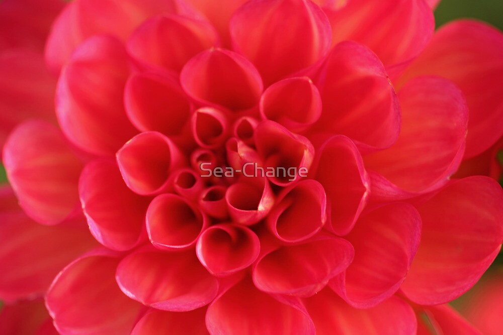 From Auntie's Garden #3 by Sea-Change