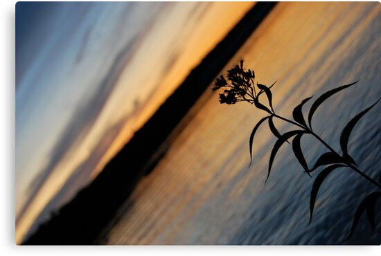 Lonesome Flower - Lunenburg, Nova Scotia by Caites