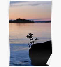 Lonesome Flower 2 - Lunenburg, Nova Scotia Poster