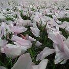 Carpet of Blossom by Julesdi88