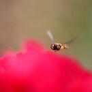 Hover Fly by SpiralPrints