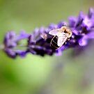 Busy Bee by SpiralPrints