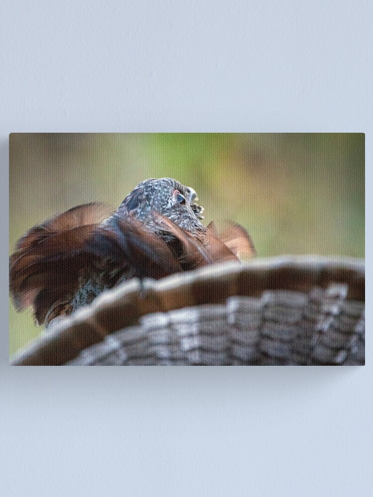Alternate view of Behold... A Fair Maiden In Yonder Tree Canvas Print