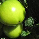 green tomatoes in the sun by Christine Ford