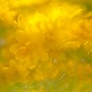 Golden Glow by David  Guidas