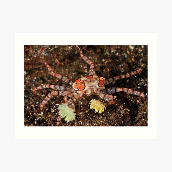 Boxer Crab Art Print