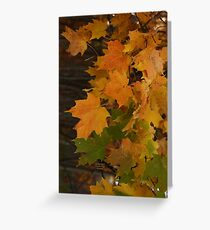 Fall Leaves iPhone case Greeting Card