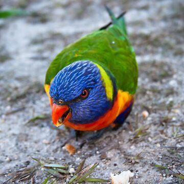 Rainbow Bird by GoldMedia